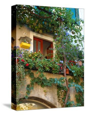 Grape Arbor and Flowers, Lake Garda, Malcesine, Italy by Lisa S. Engelbrecht
