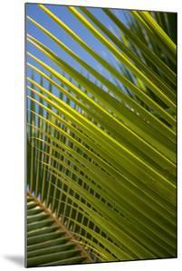 Palm Frond Natural Pattern, Bavaro, Higuey, Punta Cana, Dominican Republic by Lisa S. Engelbrecht