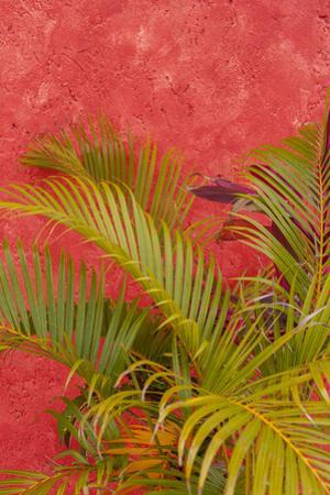 Palm Tree Against Colorful Stucco Wall, Cozumel, Mexico