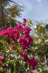 Palm Tree, Grand Cayman, Cayman Islands, British West Indies by Lisa S. Engelbrecht