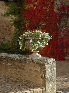 Urn of Petunias, Chateau de Pierreclos, Burgundy, France by Lisa S^ Engelbrecht