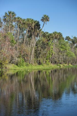 USA, Florida, Orange City, St. Johns River, Blue Spring State Park