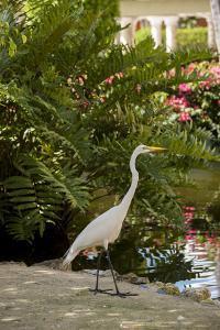 White Egret Tropical Bird, Bavaro, Higuey, Punta Cana, Dominican Republic by Lisa S. Engelbrecht