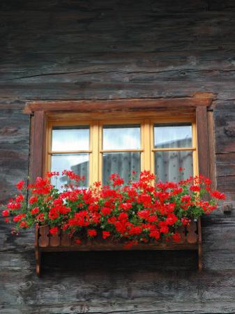 Window Box with Flowers, Zermatt, Switzerland