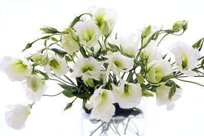 Lisianthus Flowers (Lisianthus Sp.)-Erika Craddock-Photographic Print