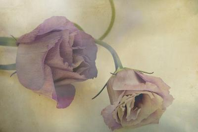Lisianthus I-Mia Friedrich-Photographic Print