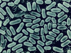 Listeria Monocytogenes Bacteria Cause Food Poisoning and Can Grow at Refrigerator Temperatures