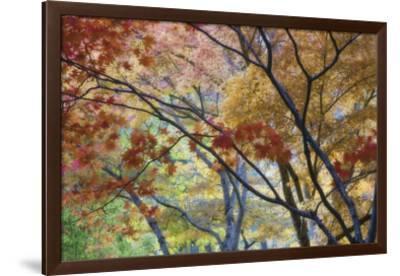 Lithia Park Fall 3-Don Paulson-Framed Giclee Print