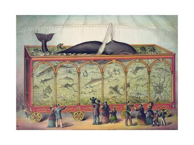 Lithograph of 19th Century Traveling Aquarium--Giclee Print