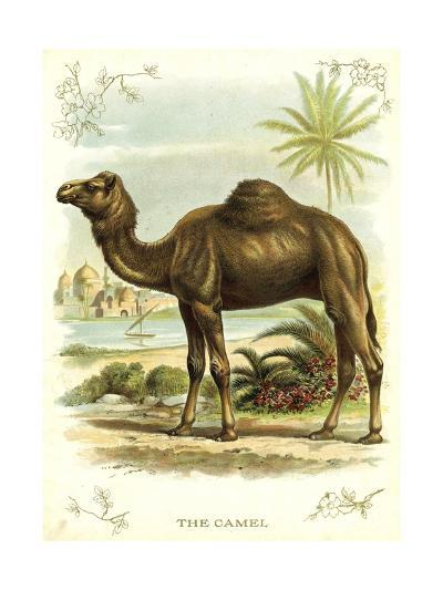 Lithograph of Camel--Giclee Print