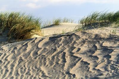 Lithuania, Curonian Spit, Perwalka, Drifting Sand Dune-Catharina Lux-Photographic Print