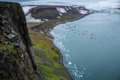 Little Auks and Glaucous Gulls from the Summit of Rubini Rock on Hooker Island-Andy Mann-Photographic Print