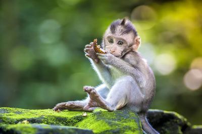 Little Baby-Monkey in Monkey Forest of Ubud, Bali, Indonesia- trubavin-Photographic Print