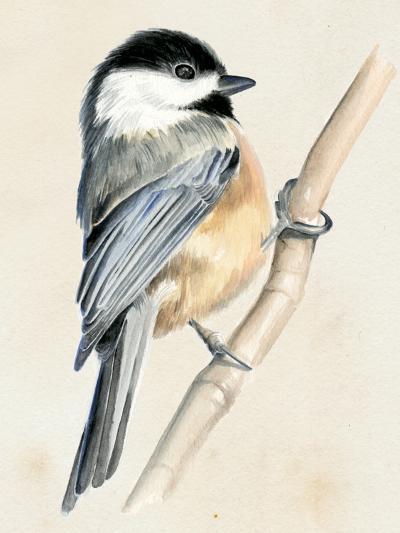 Little Bird on Branch II-Jennifer Paxton Parker-Art Print