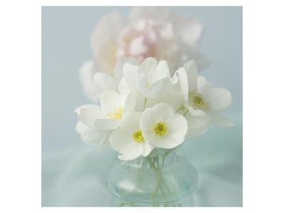 Little Bouquet of Anemones-Judy Stalus-Art Print