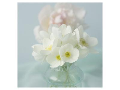 https://imgc.artprintimages.com/img/print/little-bouquet-of-anemones_u-l-f74ipk0.jpg?p=0