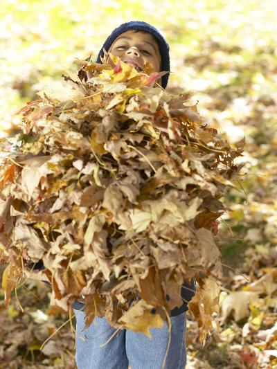 Little Boy Carrying Huge Pile of Leaves--Photographic Print