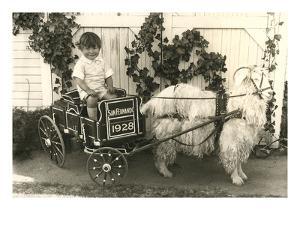 Little Boy in Goat Cart