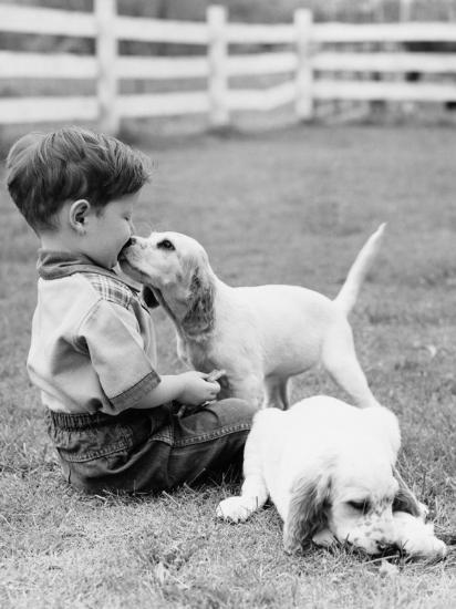 Little Boy Sitting in Grass With One Setter Puppy Licking Face and Another Lying in Grass-H^ Armstrong Roberts-Photographic Print