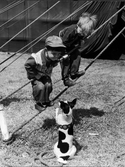 Little Boys Outside Circus Tent Playing with a Dog-Nina Leen-Photographic Print