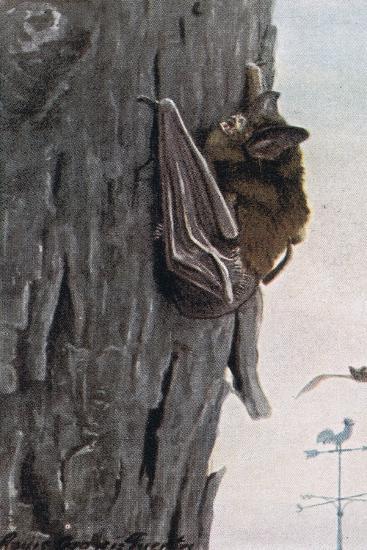 Little Brown Bat-Louis Agassiz Fuertes-Giclee Print