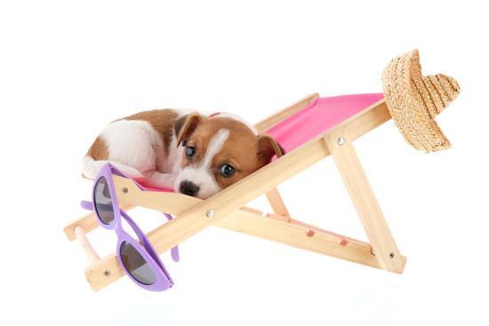 Little Cute Beach Puppy Resting In Chair-Ivonnewierink-Photographic Print