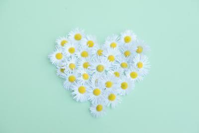 Little Daisy-Poppy Thomas-Hill-Photographic Print