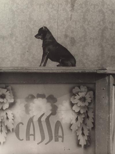 Little Dog-Vincenzo Balocchi-Photographic Print