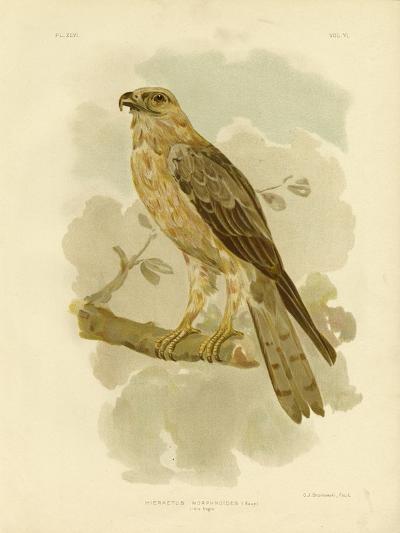 Little Eagle, 1891-Gracius Broinowski-Giclee Print