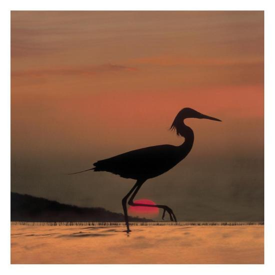 Little Egret silhouetted at sunset, Africa-Tim Fitzharris-Art Print