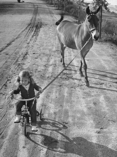 Little Girl Riding Her Tricycle, Leading Francis the Mule-Allan Grant-Photographic Print