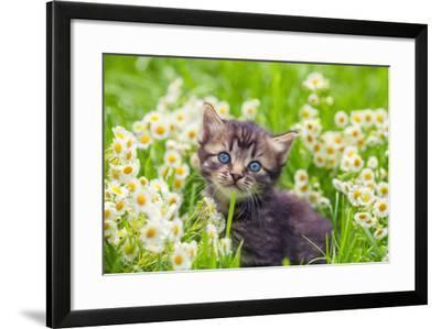 Little Kitten in the Camomile Flowers-vvvita-Framed Photographic Print