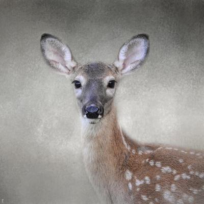 https://imgc.artprintimages.com/img/print/little-miss-lashes-white-tailed-fawn_u-l-pu0ly80.jpg?p=0