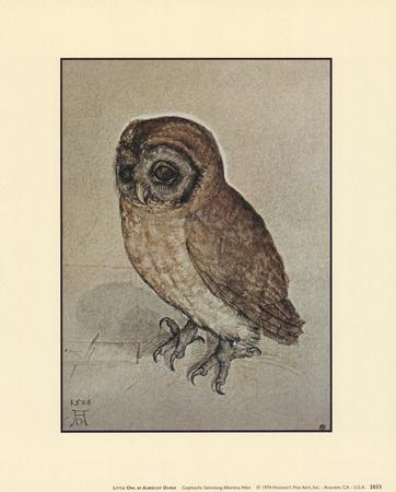 https://imgc.artprintimages.com/img/print/little-owl_u-l-e81cm0.jpg?p=0