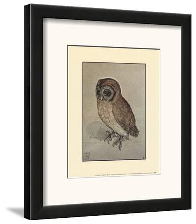 Little Owl-Albrecht D?rer-Framed Art Print