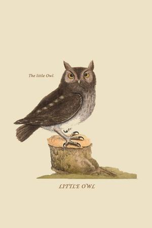 https://imgc.artprintimages.com/img/print/little-owl_u-l-pqpd8u0.jpg?p=0