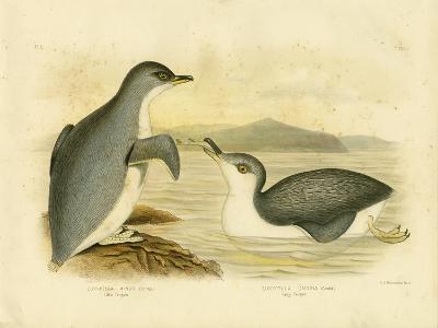 Little Penguin, 1891-Gracius Broinowski-Giclee Print