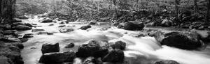 Little Pigeon River Great Smoky Mountains National Park Tennessee, USA