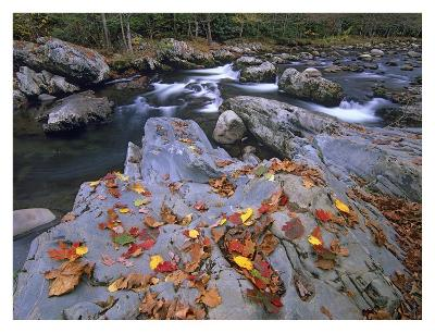 Little Pigeon River, Great Smoky Mountains National Park, Tennessee-Tim Fitzharris-Art Print