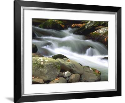 Little River Elkmont #1-J.D. Mcfarlan-Framed Photographic Print