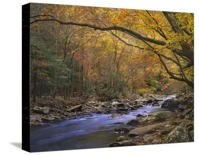 Little River flowing through autumn forest, Great Smoky Mountains National Park, Tennessee-Tim Fitzharris-Stretched Canvas Print