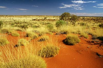 Little Sandy Desert Western Australia--Photographic Print