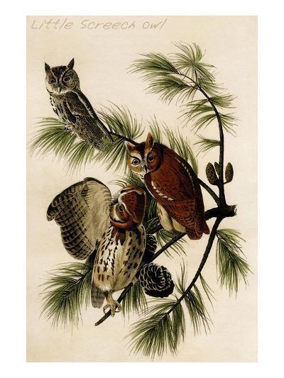 Little Screech Owl-John James Audubon-Art Print