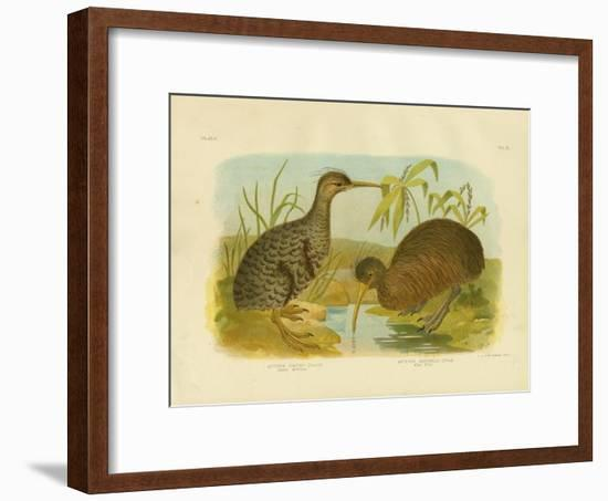 Little Spotted Kiwi, 1891-Gracius Broinowski-Framed Giclee Print