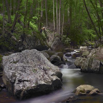Little Stony Creek, Jefferson National Forest, Virginia-Tim Fitzharris-Photographic Print