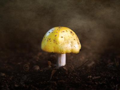 Little Yellow Mushroom-Jai Johnson-Giclee Print