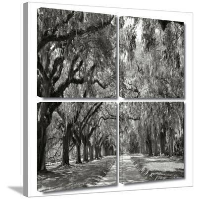Live Oak Avenue 4 piece gallery-wrapped canvas-Steve Ainsworth-Gallery Wrapped Canvas Set