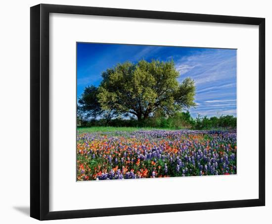 Live Oak, Paintbrush, and Bluebonnets in Texas Hill Country, USA-Adam Jones-Framed Photographic Print