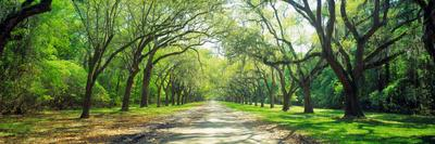 https://imgc.artprintimages.com/img/print/live-oaks-and-spanish-moss-wormsloe-state-historic-site-savannah-ga_u-l-pnv4100.jpg?p=0
