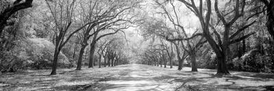 https://imgc.artprintimages.com/img/print/live-oaks-and-spanish-moss-wormsloe-state-historic-site-savannah-ga_u-l-q1blrke0.jpg?p=0